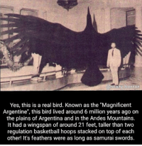 """4chan, Basketball, and Illuminati: a scary horror  Yes, this is a real bird. Known as the """"Magnificent  Argentine"""", this bird lived around 6 million years ago on  the plains of Argentina and in the Andes Mountains.  It had a wingspan of around 21 feet, taller than two  regulation basketball hoops stacked on top of each  other! It's feathers were as long as samurai swords. - - underworld euphoria melodicdeathmetal Whitechapel awakened solipsism psychedelic philosophy InFlames progressivemetal pendulum Blackmetal leukoencephalopathy infantannihilator deathcore Insomnium 4chan illuminati robswire cyberpunk jetfuelcantmeltsteelbeams andersfriden nihilism depression DarkTranquillity anxiety conspiracy anonymous persefone - Backup: @leukoencephalopathy.v2 -"""