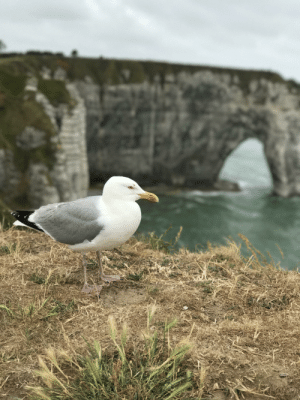 A seagull in Normandy (Iphone 7 plus): A seagull in Normandy (Iphone 7 plus)