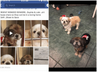 Dog Talk Share 6-18-17 Here is a feel good story for the day. These two bonded seniors found themselves in an animal shelter. What you can't see in this snap is their pitiful shaking. They had 26k shares and guess what? Yes as of yesterday they have a new loving home with Jacqi. Sweet babies have a great life and Jacqi thank you for loving these babies. ~Robin: a Search  at AU  IRGENT BONDED SENIORS...Sophie & Jubi...oh!  lease share so they can be in a loving home  SAP...Share to Save  6.6K Shares Dog Talk Share 6-18-17 Here is a feel good story for the day. These two bonded seniors found themselves in an animal shelter. What you can't see in this snap is their pitiful shaking. They had 26k shares and guess what? Yes as of yesterday they have a new loving home with Jacqi. Sweet babies have a great life and Jacqi thank you for loving these babies. ~Robin