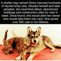 http://t.co/sKb0MToncv: A shelter dog named Ginny rescued hundreds  of injured stray cats. Abused herself and later  adopted, she searched alleys, abandoned  buildings and construction sites for cats in  need. Once found, she would alert her owner  who would take them into care. She saved  over 900 cats in her lifetime. http://t.co/sKb0MToncv