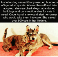 http://t.co/mf26caT8Sg: A shelter dog named Ginny rescued hundreds  of injured stray cats. Abused herself and later  adopted, she searched alleys, abandoned  buildings and construction sites for cats in  need. Once found, she would alert her owner  who would take them into care. She saved  over 900 cats in her lifetime. http://t.co/mf26caT8Sg