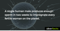Memes, Uber, and Planets: A single human male produces enough  sperm in two weeks to impregnate every  fertile woman on the planet.  uber  facts Geez. https://www.instagram.com/uberfacts/