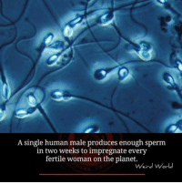 Memes, Planets, and Single: A single human male produces enough sperm  in two weeks to impregnate every  fertile woman on the planet.  Weird World