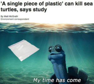 Time, Single, and Plastic: A single piece of plastic' can kill sea  turtles, says study  By Matt McGrath  Environment correspondent  My time has come