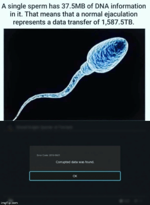 meirl: A single sperm has 37.5MB of DNA information  in it. That means that a normal ejaculation  represents a data transfer of 1,587.5TB  Error Code: 2016-0601  Corrupted data was found.  OK  imgflip.com meirl