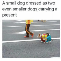 Dogs, Memes, and Adorable: A small dog dressed as two  even smaller dogs carryinga  present Adorable 😍