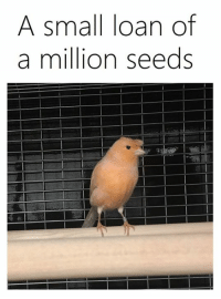 Dank Memes, Seed, and Seeds: A small loan of  a million seeds