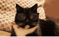 Cat, Smart, and Sir: A smart sir