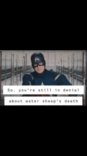 Crying, Not Crying, and Death: A  So, you're stil in denial  about water sheep's death I'm not crying you're crying