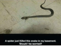 NOPENOPENOPENOPENOPENOPE: A spider just Killed this snake in my basement.  Should I be worried? NOPENOPENOPENOPENOPENOPE