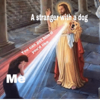 Memes, 🤖, and Dog: A strangerwitha dog  @ cabbagecatmemes  You c  d liko  ou major blessing @cabbagecatmemes
