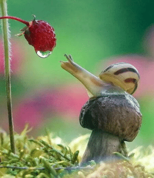 Mushroom, Snail, and Strawberry: A strawberry, a snail and a mushroom