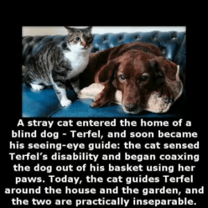 Animals, Soon..., and Home: A stray cat entered the home of a  blind dog Terfel, and soon became  his seeing-eye guide: the cat sensed  Terfel's disability and began coaxing  the dog out of his basket using her  paws. loday, the cat guides Tertel  around the house and the garden, and  the two are practically inseparable. We dont deserve animals
