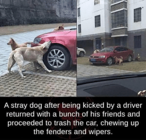 Am so proud of dem by M3k1rin MORE MEMES: A stray dog after being kicked by a driver  returned with a bunch of his friends and  proceeded to trash the car, chewing up  the fenders and wipers. Am so proud of dem by M3k1rin MORE MEMES