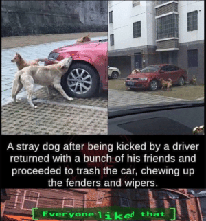 Friends, Trash, and Happy: A stray dog after being kicked by a driver  returned with a bunch of his friends and  proceeded to trash the car, chewing up  the fenders and wipers.  liked that  Everyone I ik Happy_thing