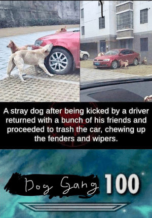 I tried my best: A stray dog after being kicked by a driver  returned with a bunch of his friends and  proceeded to trash the car, chewing up  the fenders and wipers I tried my best