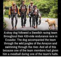 Amazon, Memes, and Ecuador: A stray dog followed a Swedish racing team  throughout their 430-mile endurance race in  Ecuador. The dog accompanied the team  through the wild jungles of the Amazon and  swimming through the river. And all of this  because one of the team members had given  him a meatball during one of the team's halts. https://t.co/qse7qw1uoY
