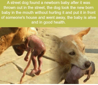 Alive, Good, and House: A street dog found a newborn baby after it was  thrown out in the street, the dog took the new born  baby in the mouth without hurting it and put it in front  of someone's house and went away, the baby is alive  and in good health. https://t.co/cRMSdYqPHT