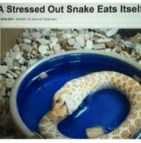 Me everyday: A Stressed Out Snake Eats Itself Me everyday