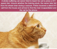 Phone, Police, and House: A stroke suffering cat owner tried to teach his cat to press a 911  speed dial. Unsure whether the training stuck, the owner later fell  from his wheel chair during a seizure. Police received a silent 911  call from the house and arrived to find the man incapacitated and  the cat by the phone. https://t.co/z4bj2EiRX2