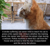 Not all heroes wear capes some have coats: A stroke suffering cat owner tried to teach his cat to  press a 911 speed dial. Unsure whether the training  stuck, the owner later fell from his wheel chair during  a seizure. Police received a silent 911 call from the  house and arrived to find the man incapacitated  and the cat by the phone. Not all heroes wear capes some have coats