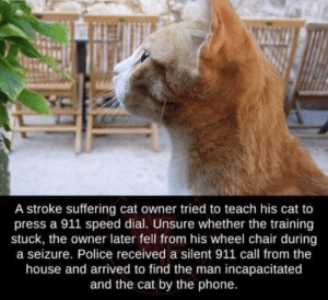 Cat Owner: A stroke suffering cat owner tried to teach his cat to  press a 911 speed dial. Unsure whether the training  stuck, the owner later fell from his wheel chair during  a seizure. Police received a silent 911 call from the  house and arrived to find the man incapacitated  and the cat by the phone.