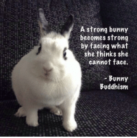 Deep bunny wisdom.  ~Queen Shithead~: A strong bunny  becomes strong  by facing what  She thinks she  cannot face.  Bunny  Buddhism Deep bunny wisdom.  ~Queen Shithead~