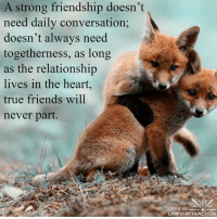 Friends, True, and Heart: A strong friendship doesn't  need daily conversation;  doesn't always need  togetherness, as long  as the relationship  lives in the heart  true friends will  never part.  iving the  LAW of ATTRACTION