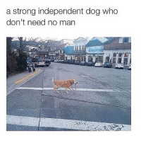 serve warm with rice: a strong independent dog who  don't need no man serve warm with rice