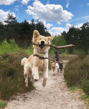 A successful branch manager: A successful branch manager