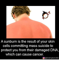 sunburn: A sunburn is the result of your skin  cells committing mass suicide to  protect you from their damaged DNA,  which can cause cancer.  O @blowing facts365