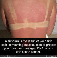 Lv2u: A sunburn is the result of your skin  cells committing mass suicide to protect  you from their damaged DNA, which  Can Cause Cancer.  weird-facts.org  @facts weird Lv2u