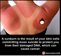 sunburn: A sunburn is the result of your skin cells  committing mass suicide to protect you  from their damaged DNA, which can  Cause Cancer.  O @blowingfacts365