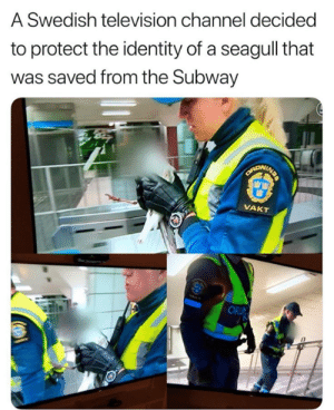 Funny, Subway, and Tumblr: A Swedish television channel decided  to protect the identity of a seagull that  was saved from the Subway  VAKT