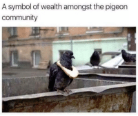 Community, Pigeon, and Symbol: A symbol of wealth amongst the pigeon  community