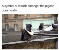 Community, Dank Memes, and Pigeon: A symbol of wealth amongst the pigeon  community Bougie @animalsdoingthings