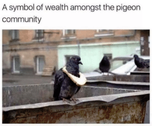 Community, Dank, and Flexing: A symbol of wealth amongst the pigeon  community weird flex but ok by donrush MORE MEMES