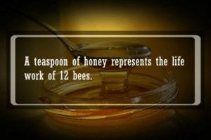 "Facts, Food, and Growing Up: A teaspoon of honey represents the life  work of 12 bees. rainnecassidy:  congenitalprogramming:  cotestuck:  montypla:  meloromantics:  appropriately-inappropriate:  audreyvhorne:  sttinkerbelle:  vmpolung:  knowledgeandlove:  Photo source Fact check source  #and I just don't feel entitled to someone else's life's work.  That comment exactly!! It's not mine and I can survive without it, so I will.  This is why honey is not vegan.  The problem here is that honey, especially if you buy it ethically from an apiarist, isn't actually detrimental to the well-being of the bee or the hive. In the wild, honey is used as a food stock, but in a domesticated honeybee colony, the bees are fed quite well, and so the honey is a surplus. The alternatives, like sugar, relies on monocrops in third world countries, with transient labour. Growing up, there was a sugarcane field by my house, and I'm sure the Haitian men who worked backbreaking hours hacking a machete through knife-bladed leaves in 40 degree heat for a couple dollars a day would have traded a testicle to be a Canadian honeybee. Stevia's going the same way, iirc. Additionally, apiarists are actually huge proponents and activists for sustainable bee-keeping, and it's estimated that the domesticated hive may be the last great hope for declining populations, because we can optimize their chances for survival. It's their life's work, sure, but it's not the death of them to use it responsibly.  literally read anything about the history of sugarcane and the cuban sugar industry if you think sugar is or ever has been more ethical than honey  Beekeepers- Provide a home for the bees Keep that home warm in the winter Keep the bees well fed, negating the need for honey, which the bees would make anyways Still do not take all the honey, just in case Protect the bees from predators Monitor the hives for any signs of the parasites, diseases, etc. that cause colony collapse disorder Their bees- Provide a valuable and reliable source of pollination for plants in the area, both wild and crops Help keep the local ecosystem healthy Honey- Is one of the healthiest things you can eat Is able to keep for a EXTREMELY long time (Millennia even), making it more valuable than many perishable foods without being full of preservatives Can be used to soothe sore throats, nauseau, etc. Has been eaten by humans since at least Ancient Egypt (We've found STILL EDIBLE honey in tombs) Is a great tool in cooking, adding sweetness without raising the sugar content much Is a staple food in many people's diets Honey is amazing you can put it on or in pretty much everything I goddamn love it and you should too.   Honey is also a natural antimicrobial that has been used medicinally since time out of mind on external wounds like edible neosporin. Particularly useful in the treatment of dermal abcesses.   ""oh no we steal it from the bees!""*has no problem benefiting from exploited migrant farm workers*   ^^^"