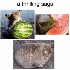 Caturday Is Finally Here Along With 26 Amazing Cat Memes! - I Can ...: a thrilling saga Caturday Is Finally Here Along With 26 Amazing Cat Memes! - I Can ...