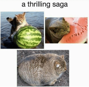 Only a thrilling saga for the fattest of cats! : Frugal_Jerk: a thrilling saga Only a thrilling saga for the fattest of cats! : Frugal_Jerk