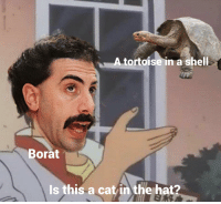 Borat: A tortoise in a shell  Borat  Is this a cat in the hat?