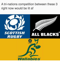 Af, Instagram, and Lit: A tri-nations competition between these 3  right now would be lit af  (R  SCOTTISH ALL BLACKS  RUGBY  RUGBY  MEMES  Instagram  Wallabies Last 3 results: Wallabies > All Blacks, All Blacks > Scotland, Scotland > Wallabies 🇦🇺🏴󠁧󠁢󠁳󠁣󠁴󠁿🇳🇿 rugby wallabies scotland allblacks