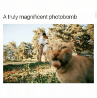 Funny, Photobomb, and Ted: A truly magnificent photobomb Ewwww they're kissing (@hilarious.ted)