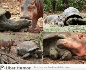 A baby hippopotamus that survived the Tsunami waves (2010) on the Kenyan coast has formed a strong bond with a giant male century-old tortoise in an animal Facility in the port city of Mombassa.http://meme-rage.tumblr.com: A Uber Humor  I did not have sexual relations with that woman. A baby hippopotamus that survived the Tsunami waves (2010) on the Kenyan coast has formed a strong bond with a giant male century-old tortoise in an animal Facility in the port city of Mombassa.http://meme-rage.tumblr.com