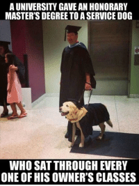 Masters, Doggo, and Dog: A UNIVERSITY GAVE AN HONORARY  MASTER'S DEGREE TO A SERVICE DOG  WHO SAT THROUGH EVERY  ONE OF HIS OWNER'S CLASSES Doggo is very inteligento