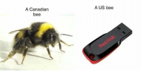 A US bee  A Canadian  bee
