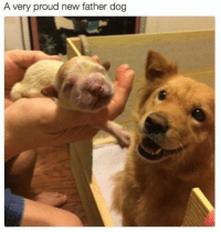 Proudness: A very proud new father dog