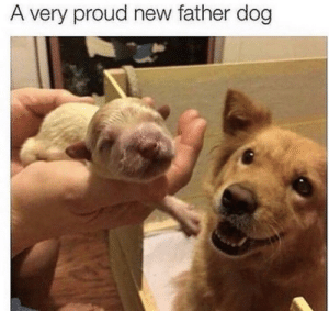 Aww look at his face: A very proud new father dog Aww look at his face