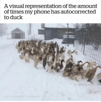 Phone, Duck, and Girl Memes: A visual representation of the amount  of times my phone has autocorrected  to duck Ducking absurd