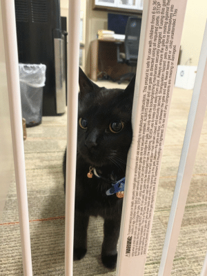 I took my cat to work. When I left the room she pressed her face against the bars, to watch me go down the hall. Photo was taken by a coworker.: A WARNING: To prevent serious injury or death, securely install gate or enclosure and use according to manufacturer's instructions. This product is safe for use with children from 6 to 36  months of age. Children have died or been seriously injured when gates are not securely installed. ALWAYS install and use gate as directed using all required parts. STOP  using when a child can cimb over or dislodge the gate. STOP using when a pet can climb over or dislodge the gate. Use only with the locking/latching mechanism securely engaged. If using this gat  al the top of stairs, the four wall cups MUST be used. If not used, the gate may be dislodged from the opening. NEVER use to keep child away from pool. Always ensure the gate is resting against the  floor before beginning installation. This is a Pet Gate, but when used with children the small pet door must remain closed and securely latched. Strangulation hazard: pets can force themselves into  very small openings, use this gate with pets whose heads will not fit into openings in the gate, between the gate and floor, or between the gate and wall. Never leave pet or child unattended. This  product may not prevent all accidents. Check the gate regularly to see if all the hardware and mountings are tightened. Do not use if any components are missing or damaged. I took my cat to work. When I left the room she pressed her face against the bars, to watch me go down the hall. Photo was taken by a coworker.